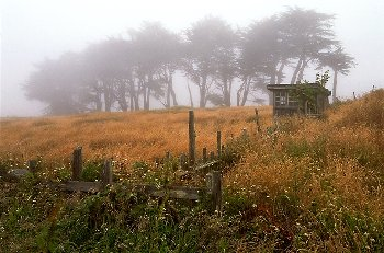 Foggy Meadow near Mendocino, California
