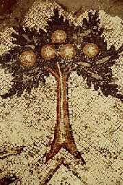 """Tree"", Caesarea, church outside the walls, Israel"